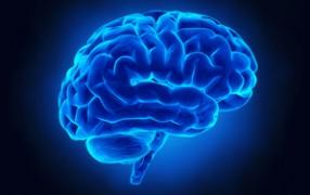 3.4.15-brain